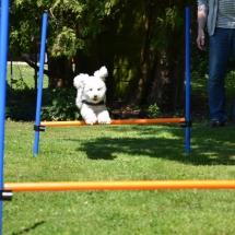 Hundeplatz Homepage 022