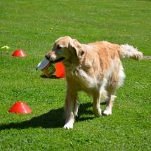 Hundeplatz Homepage 031