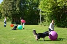 Hundeplatz Homepage 107