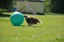 Hundeplatz Homepage 117
