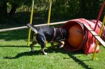 Hundeplatz Homepage 133