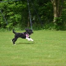 Hundeplatz2 069